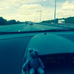 Teeny tiny teddy on the road